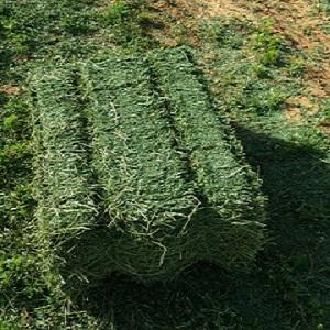 alfalfa  - alfalfa hay/animal feed
