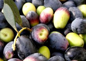 Huile d'olive fruité vert - null