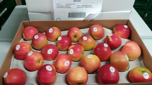 Idared apples -