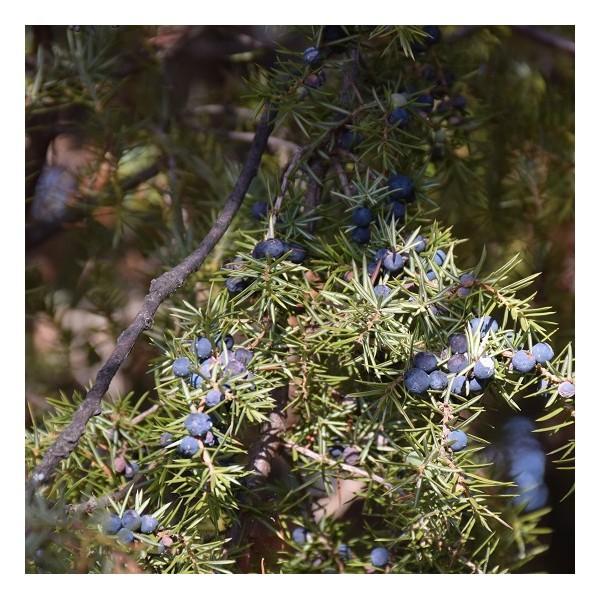 Eau florale de Genévrier biologique - Eaux florales