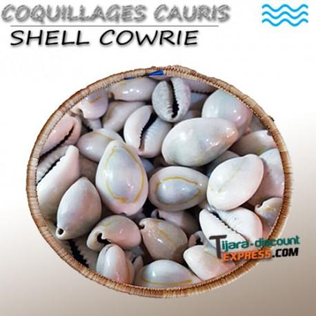 Coquillages Cauris (el Wadaa) - Produits en vrac