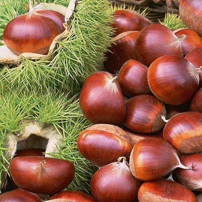 Chestnuts - New crop 2017