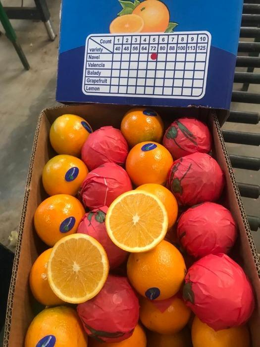 Valencia egipcia - naranja
