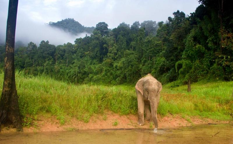 Wildlife Explorer - Khao Sok