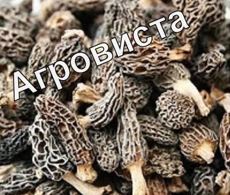 Сморчки Сушеные (Morchella conica) 2018 года