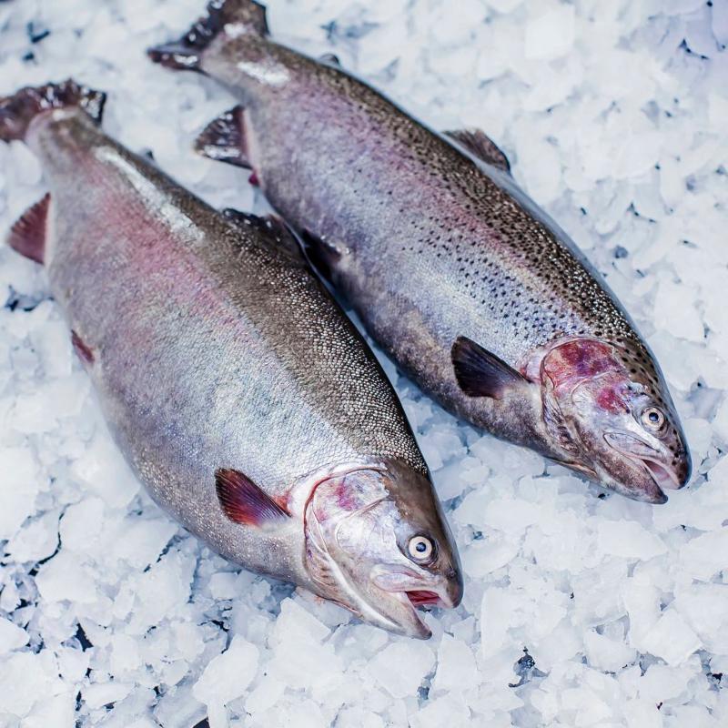 Trout fillet s/s (slices) - FRESH FROZEN FISH