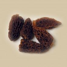 Champignons - Morilles