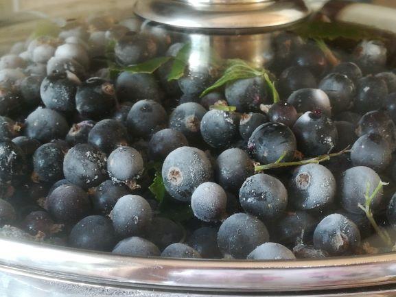 Bilberry juice (vaccinium myrtillus) pasteurized  - 100 % arctic bilberry