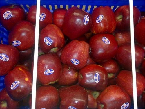 FRESH FRUITS - IMPORT FRESH GREEK FRUIT AND VEGETABLES IN YOUR COUNTRY?
