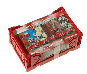 Kiste mit Blumenzwiebeln