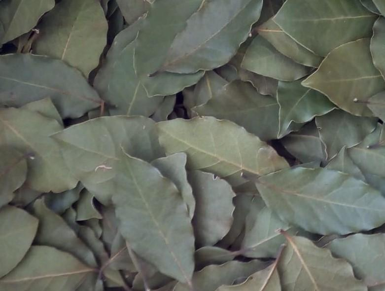 Turkish Bay leaf - Whole - Hand Selected - laurel bay leaves