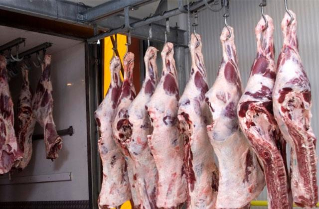 HIGH QUALITY WHOLE BEEF CARCASS