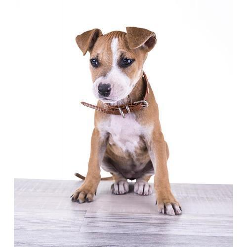 Collar para perro DG04 - BL DG 04