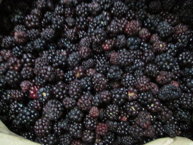 ostružiny mražené - blackberry