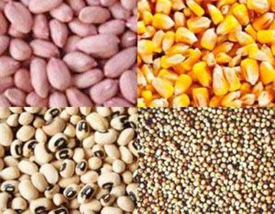 Semences certifiées - Bio-industrie Végétaux