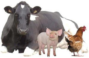 Produits naturels pour nutrition élevage