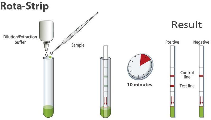 Rapid test for detection of Rotavirus in stool specimens - null