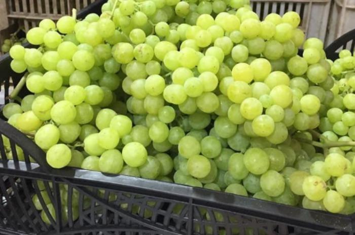 Egyptian Grape - Organic