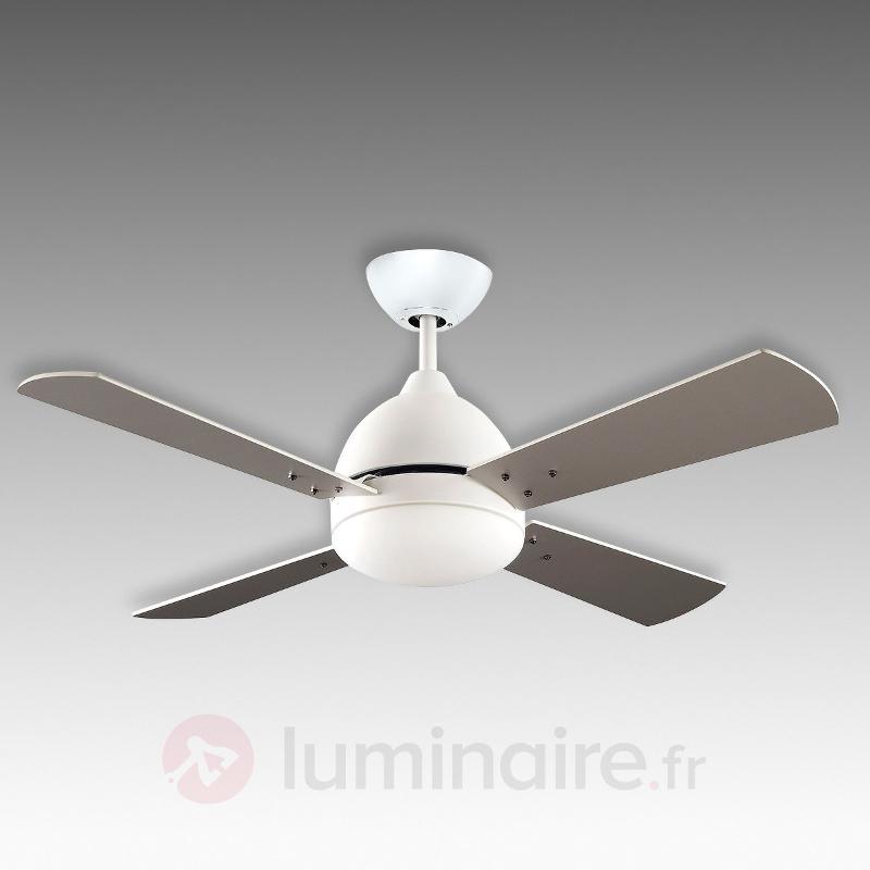 Ventilateur de plafond blanc Borneo avec éclairage - Ventilateurs de plafond modernes