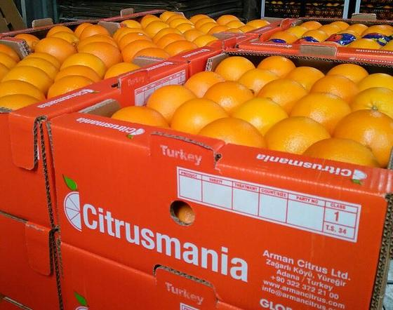 Oranges  - Navel Washington, Valencia