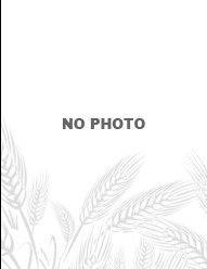 Rice Jasmine - null