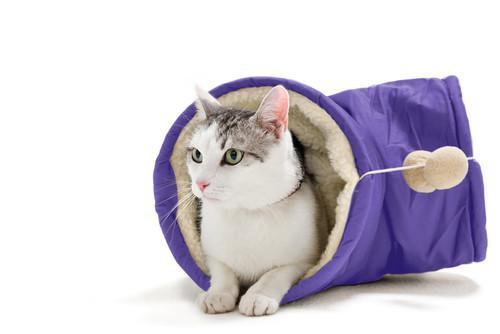 Vetement pour chat Hunter -