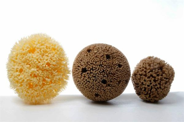 Sea sponges - HONEYCOMB Sponges