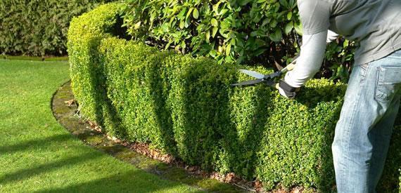 Jardinage entreprises for Entreprise jardinage