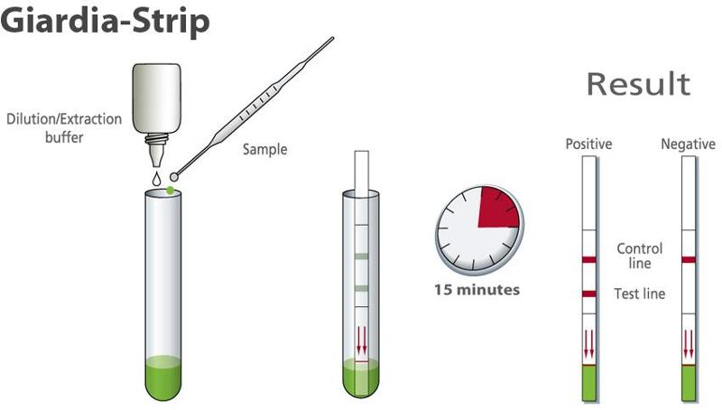 Rapid diagnostic for detection of Giardia - null