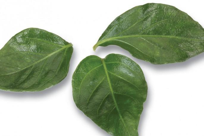 JamPet Leaves - Micro végétaux