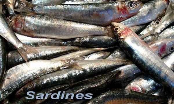 Poissons Anchois et Sardines - Poisson de mer Frais