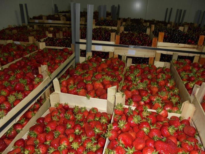 Свежие  фрукты из Сербии  - свежие фрукты на экспорт