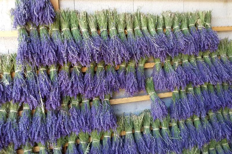 Lavender and lavandin bunches - Herbal products