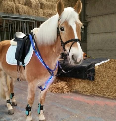 High bright led retractable horse harness with battery - battery flashing led light horse harness