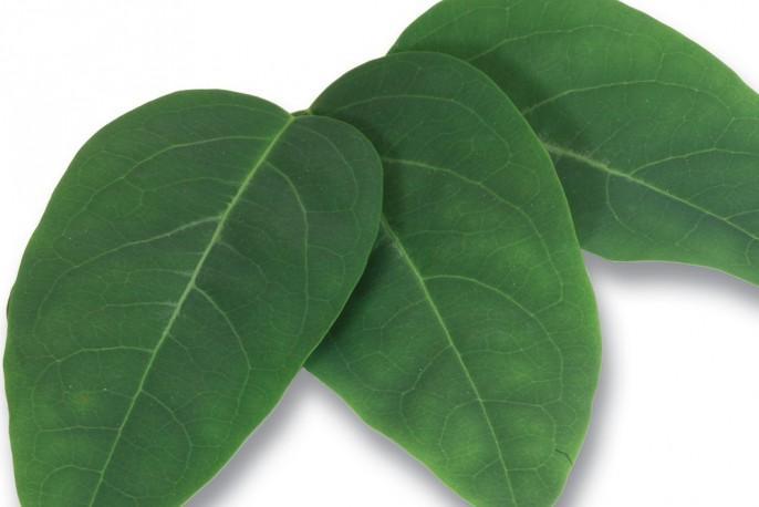 Grenotti-Leaves - Micro végétaux