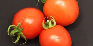Tomato - Sale Tomato