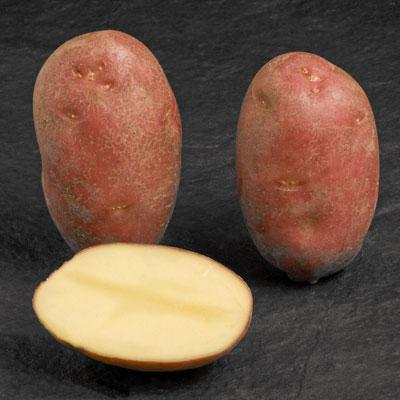 Potatoes - Red skin - ASTERIX