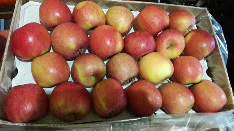 Apples Fuji -