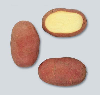 Potatoes - Red skin - RED SCARLETT