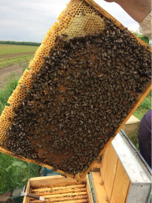 "Honey - ""Sila meda+"" ""Sila meda+"" honey with propolis"