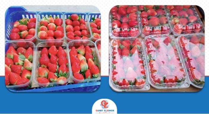 Fresa fresca - Orgánica