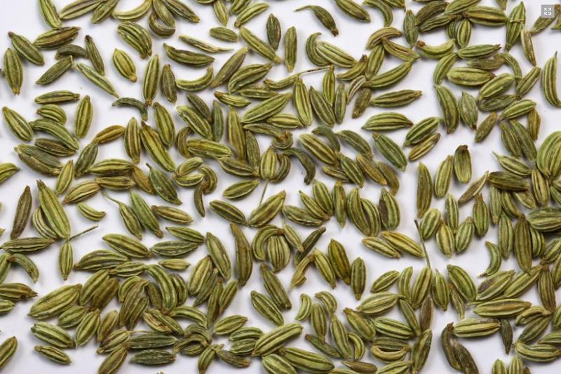 Fennel Seeds - Herbs