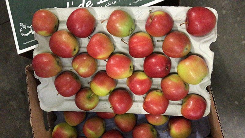 Apple Braeburn -