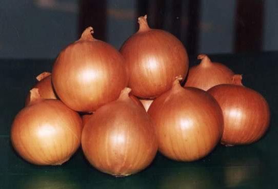 Golden Onion - Egyptian Golden Onion