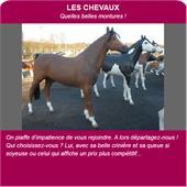 Animaux en résine - chevaux en résine : chevaux en réisine taille réelle
