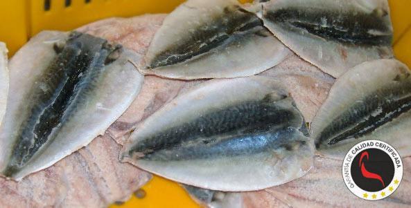 Filete de Caballa