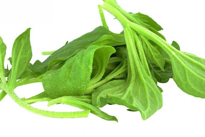 Ficoide glaciale - Légumes - jeunes pousses