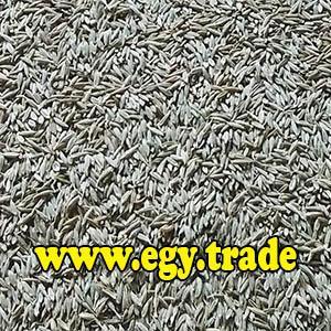 CUMIN seeds - Egyptian CUMIN seeds