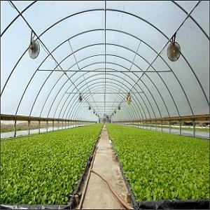Greenhouse Film - Polyethylene sheet for covering crops