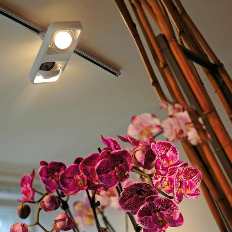 Lynah LED spot 2-bulb for 3-circuit tracks, white - indoor-lighting